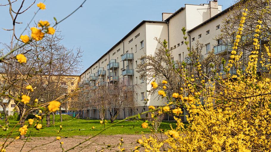 Grüner Hinterhof in der Reichelstraße
